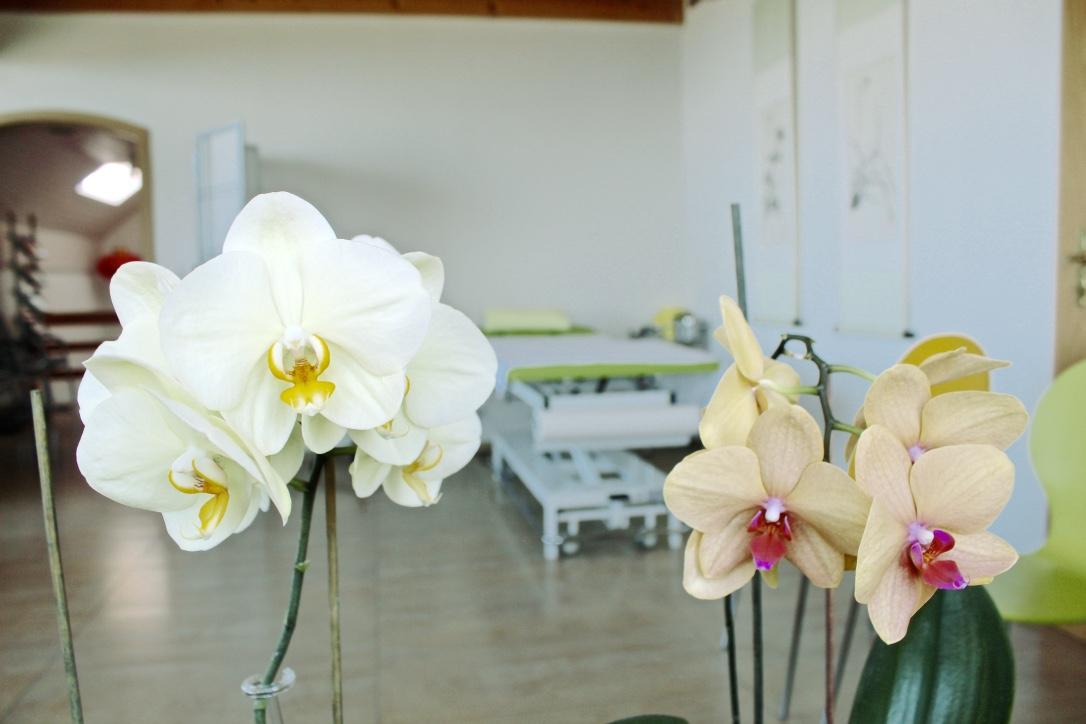 Orchideen Praxiszimmer 4