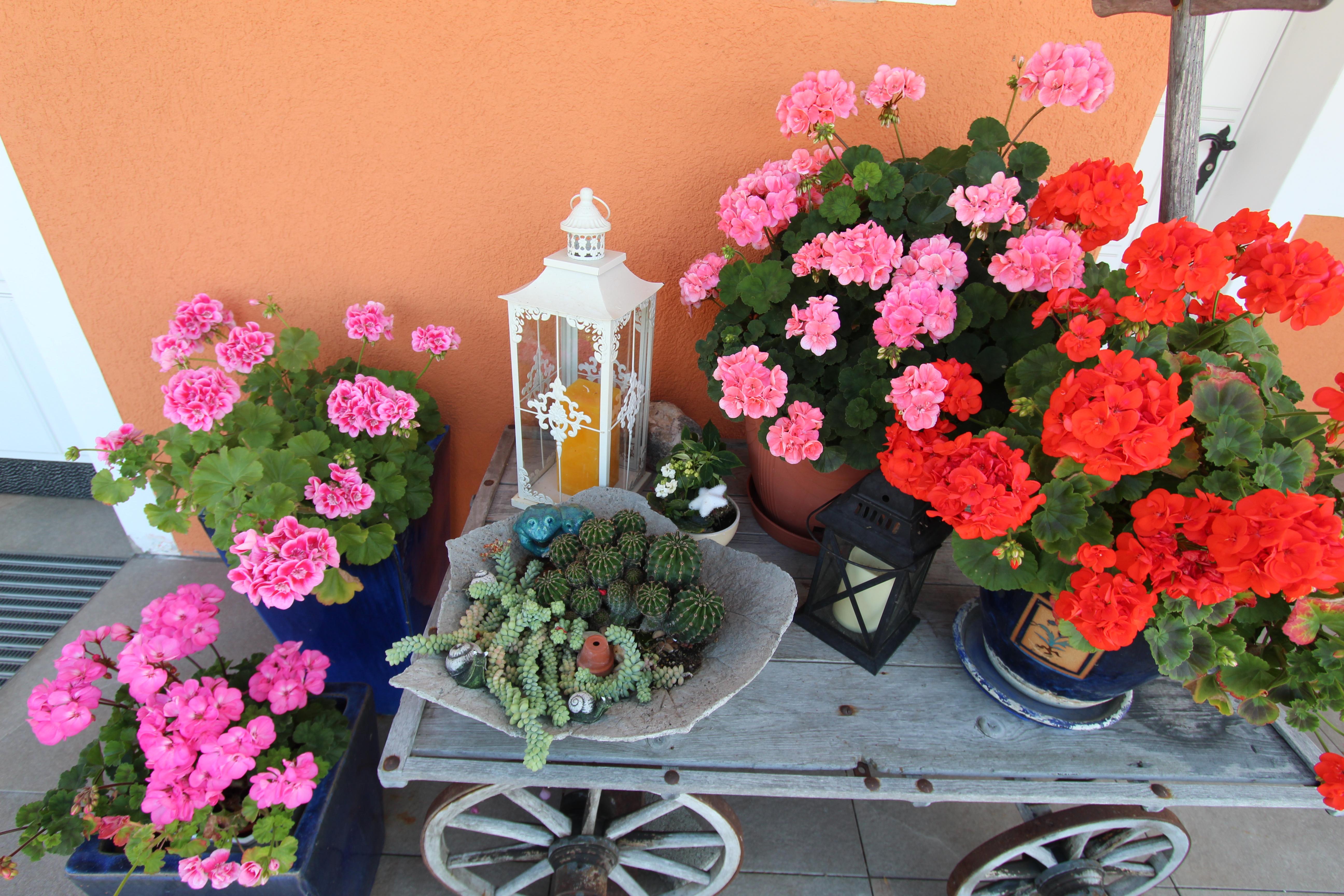 Blumen Eingangsbereich