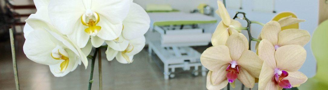 Orchideen BHZ 4